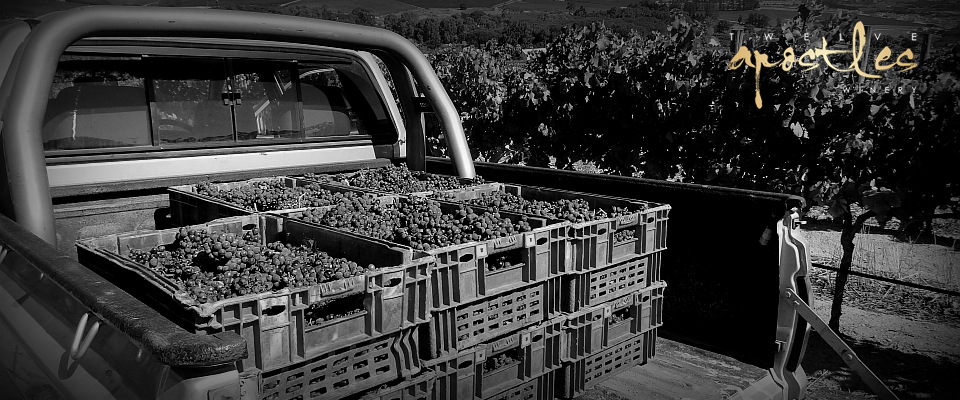 vineyards 9 BW logo